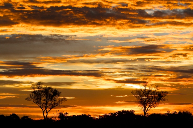 Chobe Sunset - Lisa Holzwarth